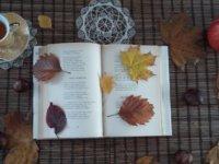 ne menj még ősz